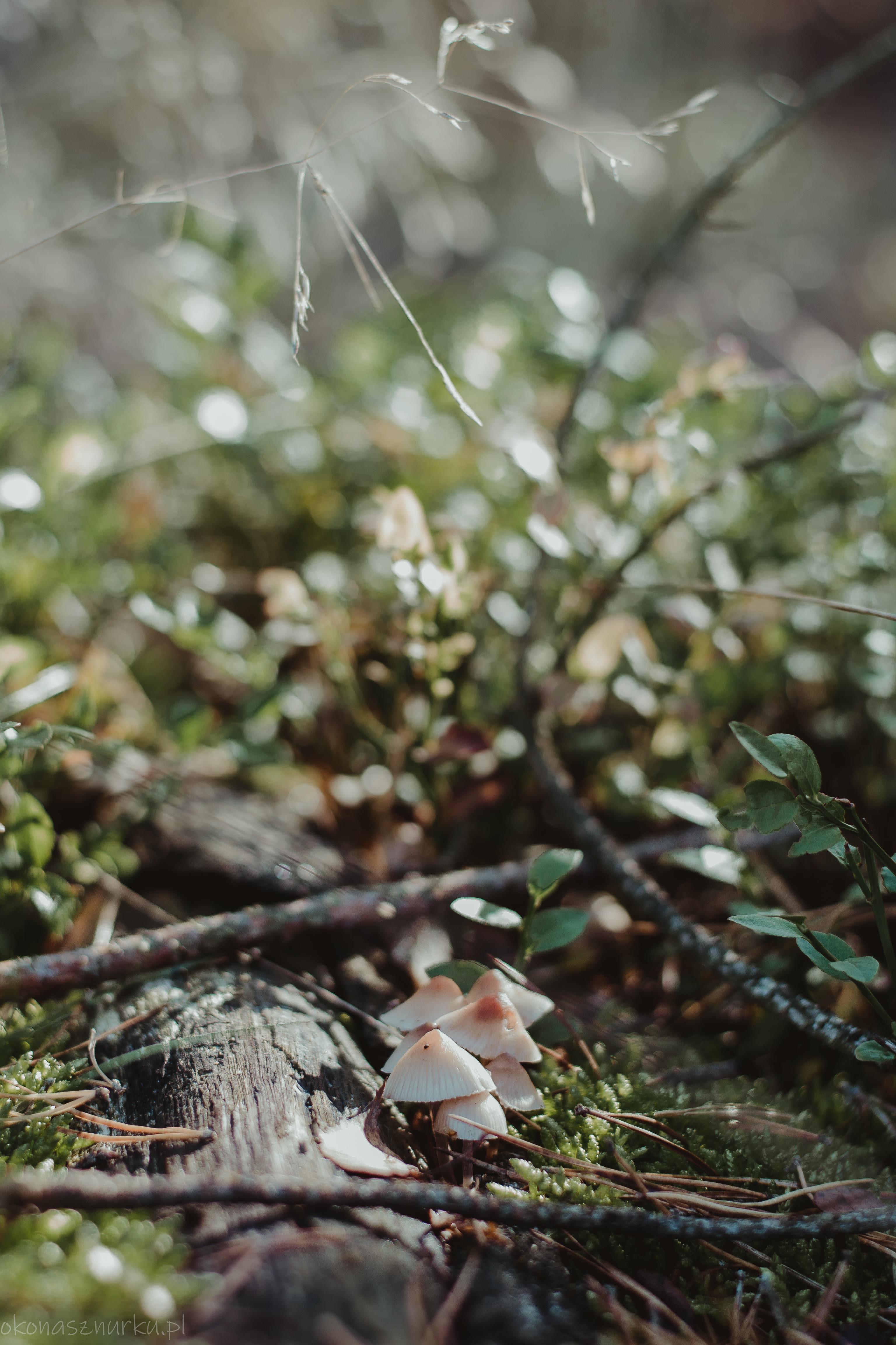 grzybobranie-okonasznurku (11)
