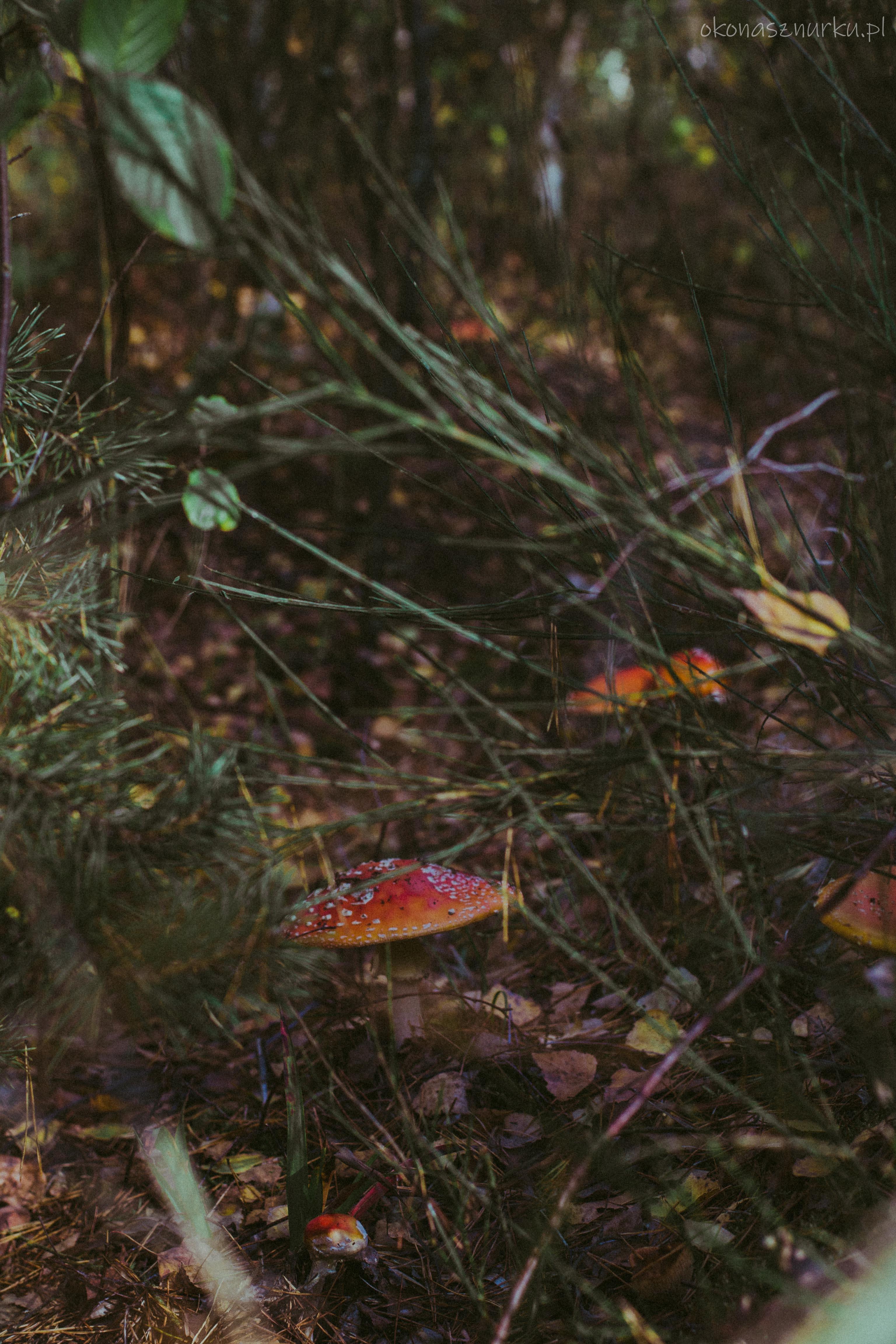 grzybobranie-okonasznurku (13)