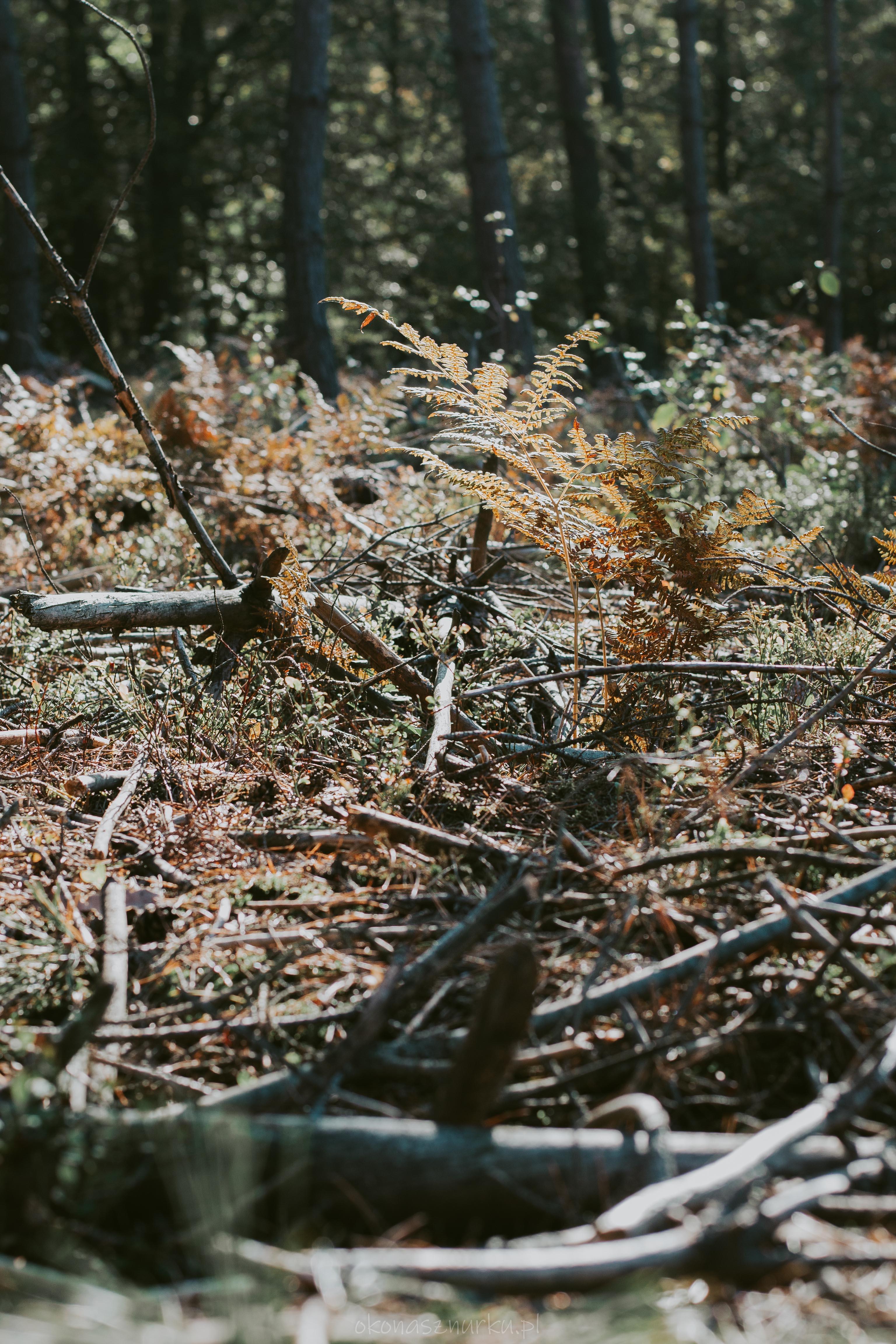 grzybobranie-okonasznurku (18)