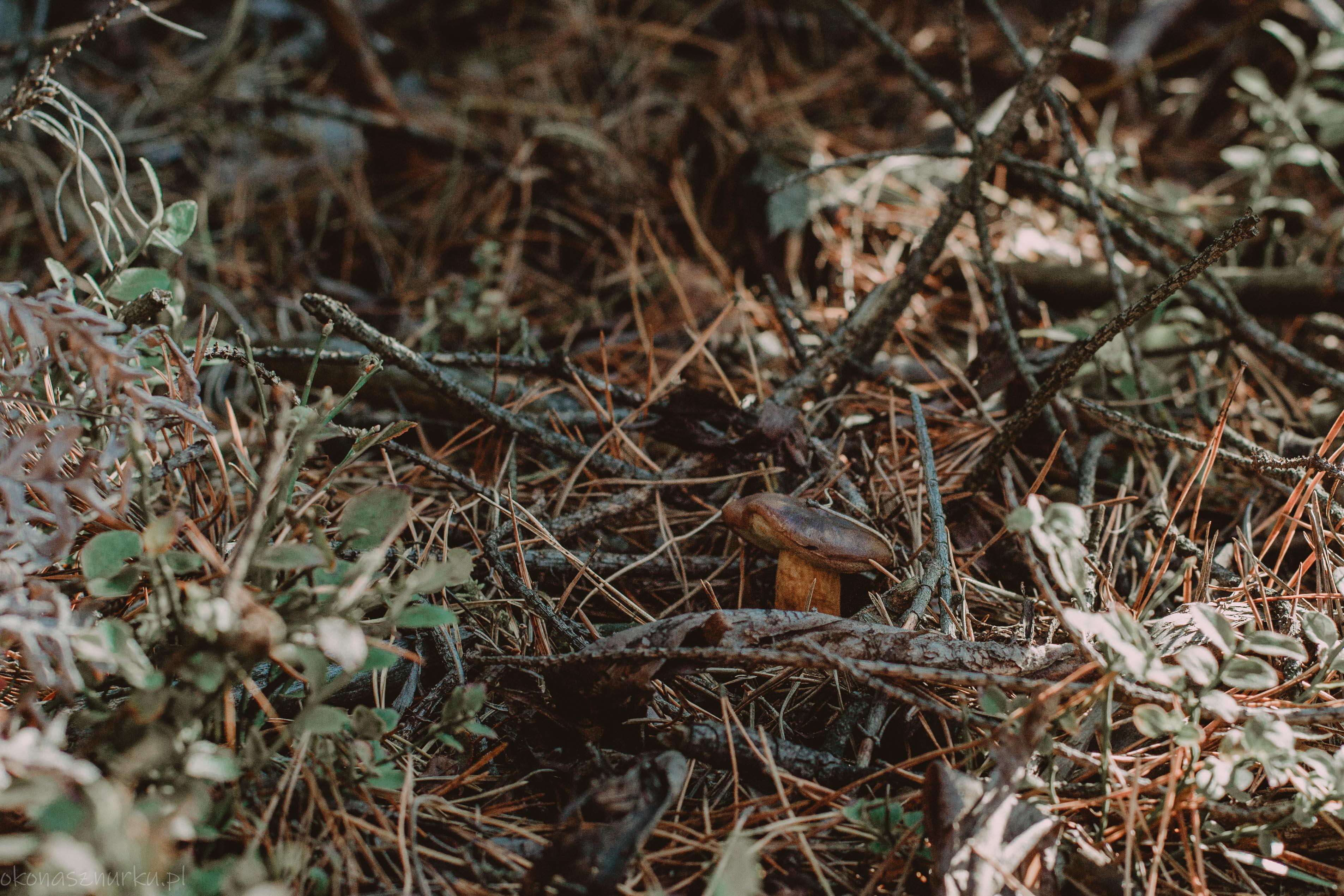 grzybobranie-okonasznurku (19)