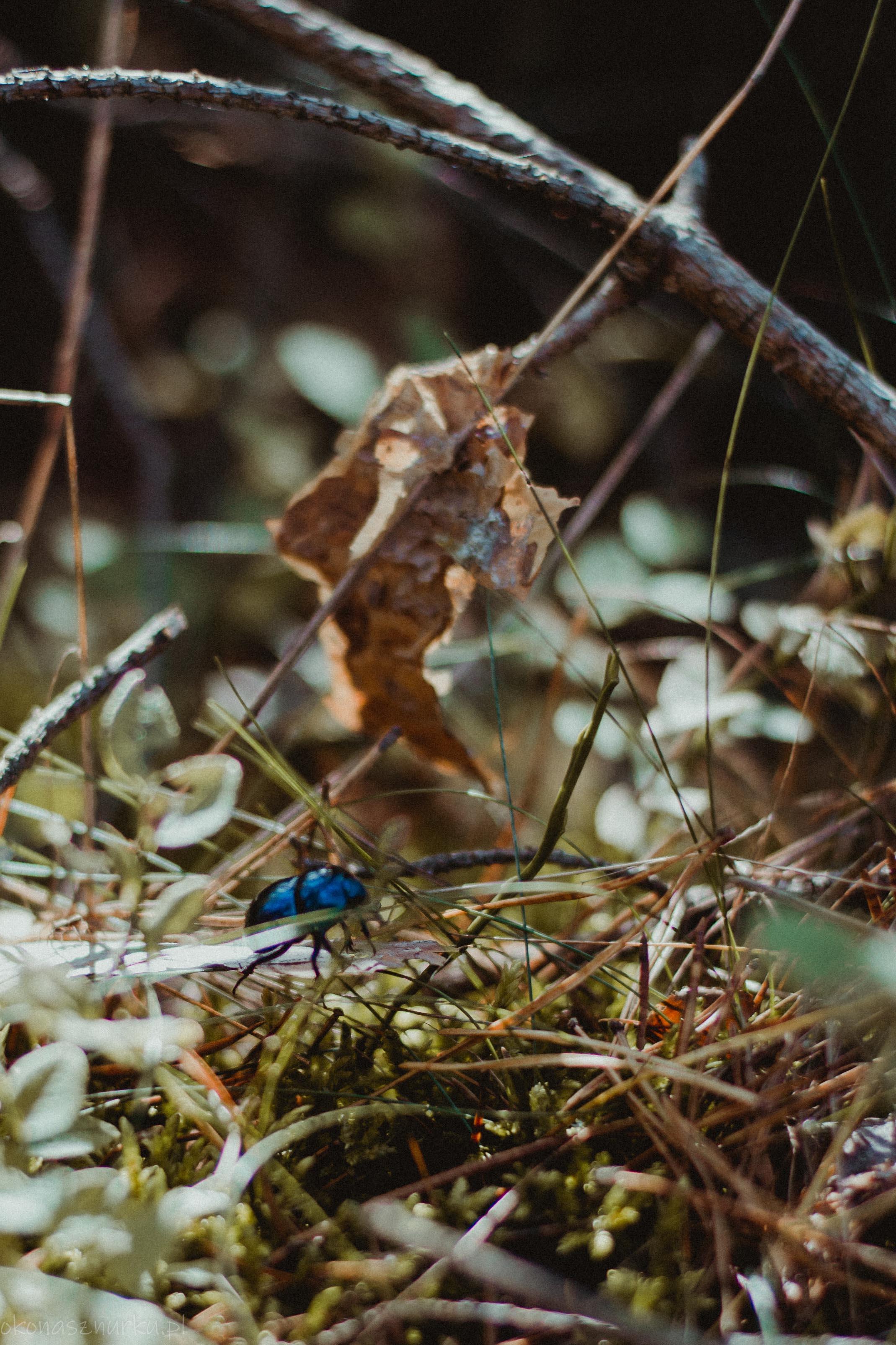 grzybobranie-okonasznurku (21)