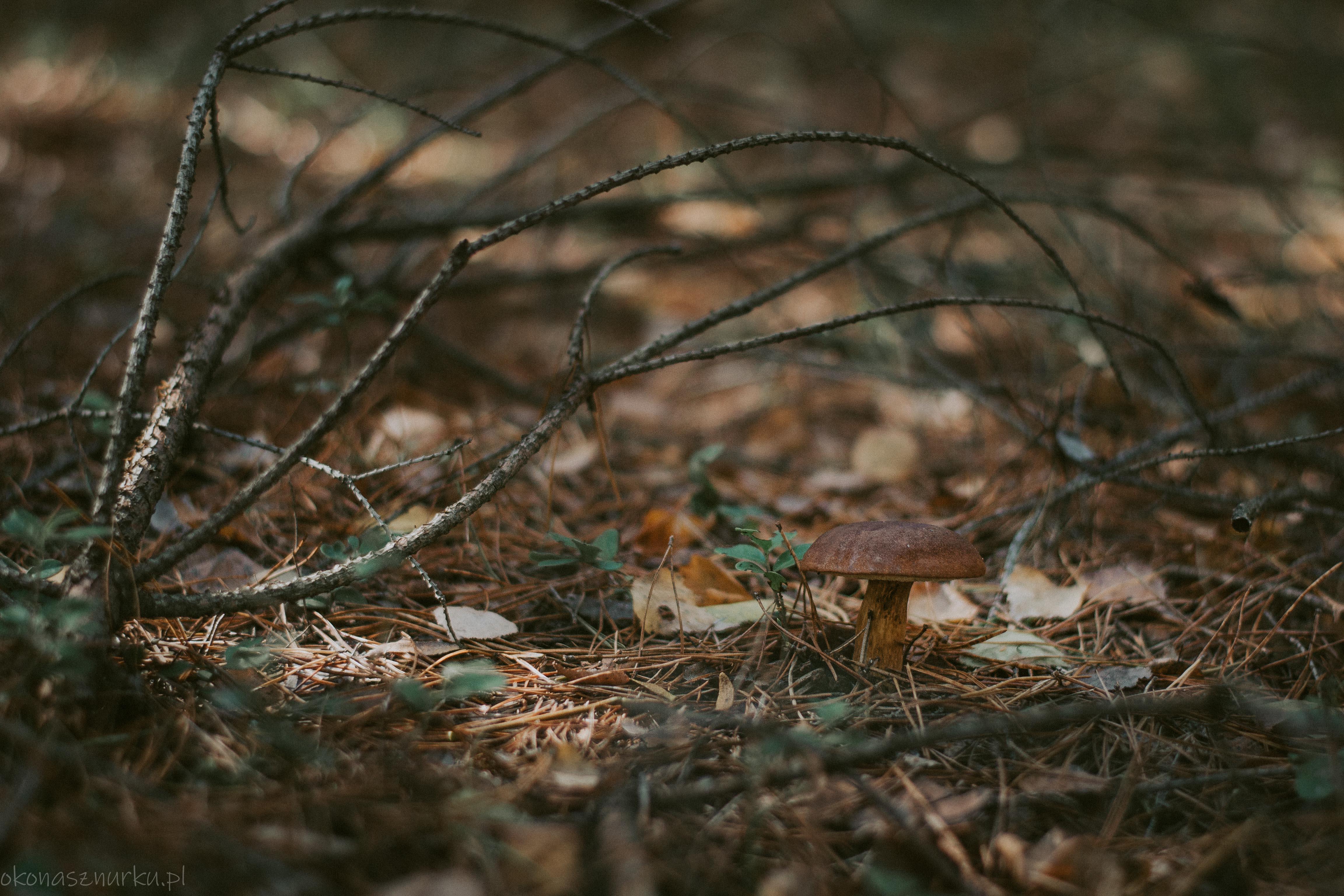 grzybobranie-okonasznurku (23)