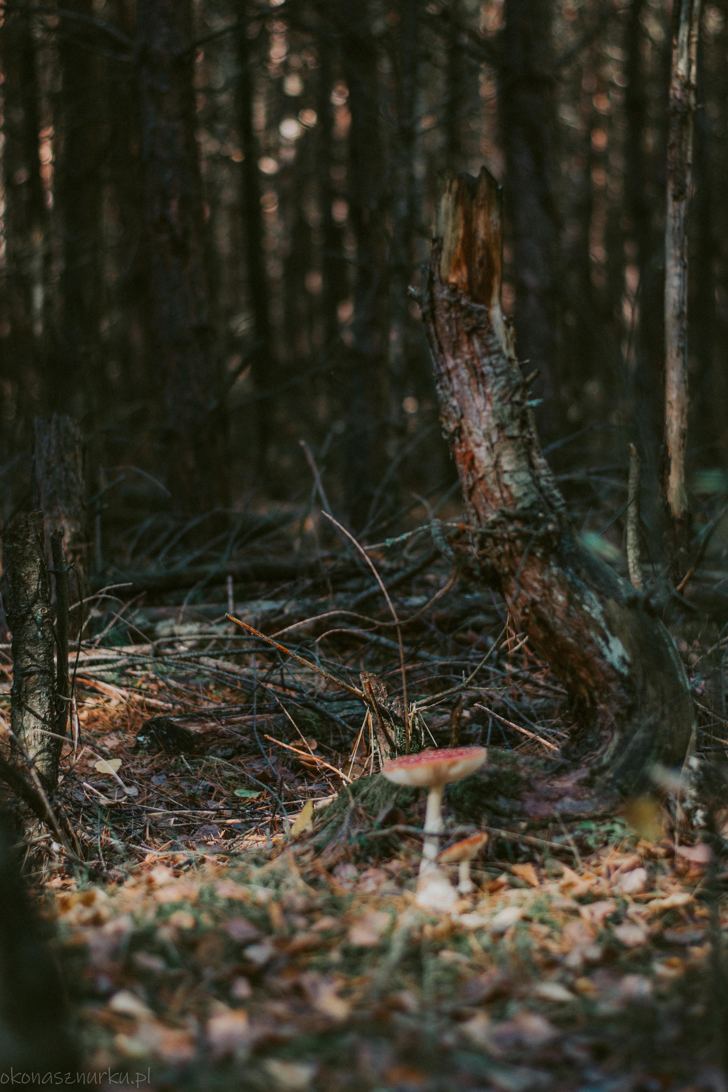 grzybobranie-okonasznurku (25)
