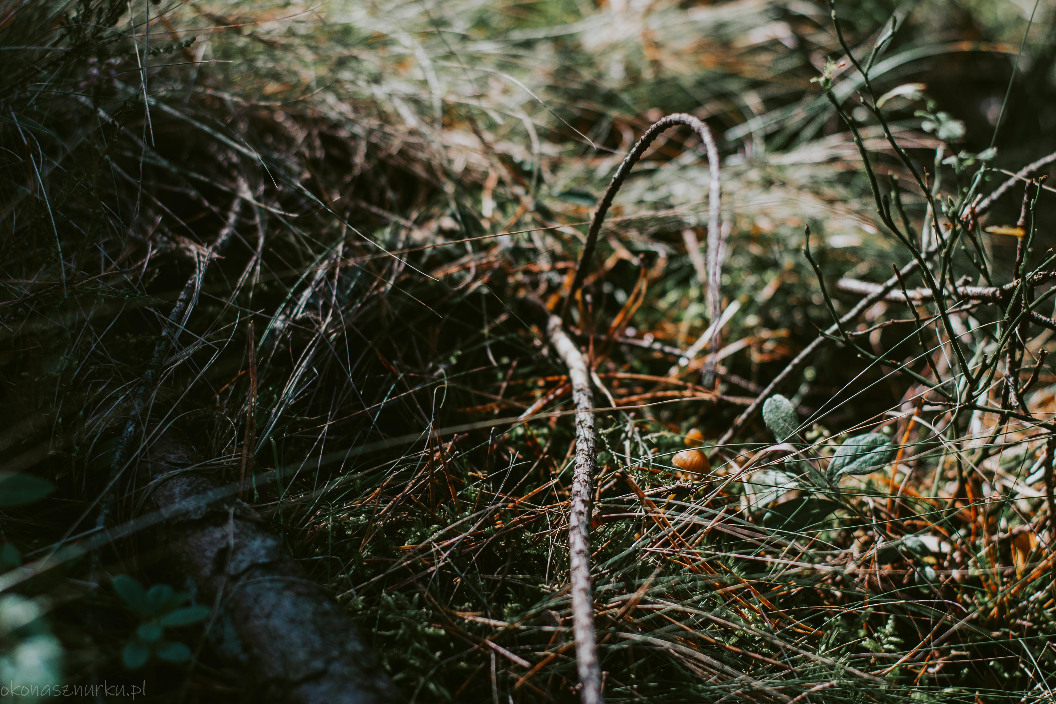 grzybobranie-okonasznurku (28)