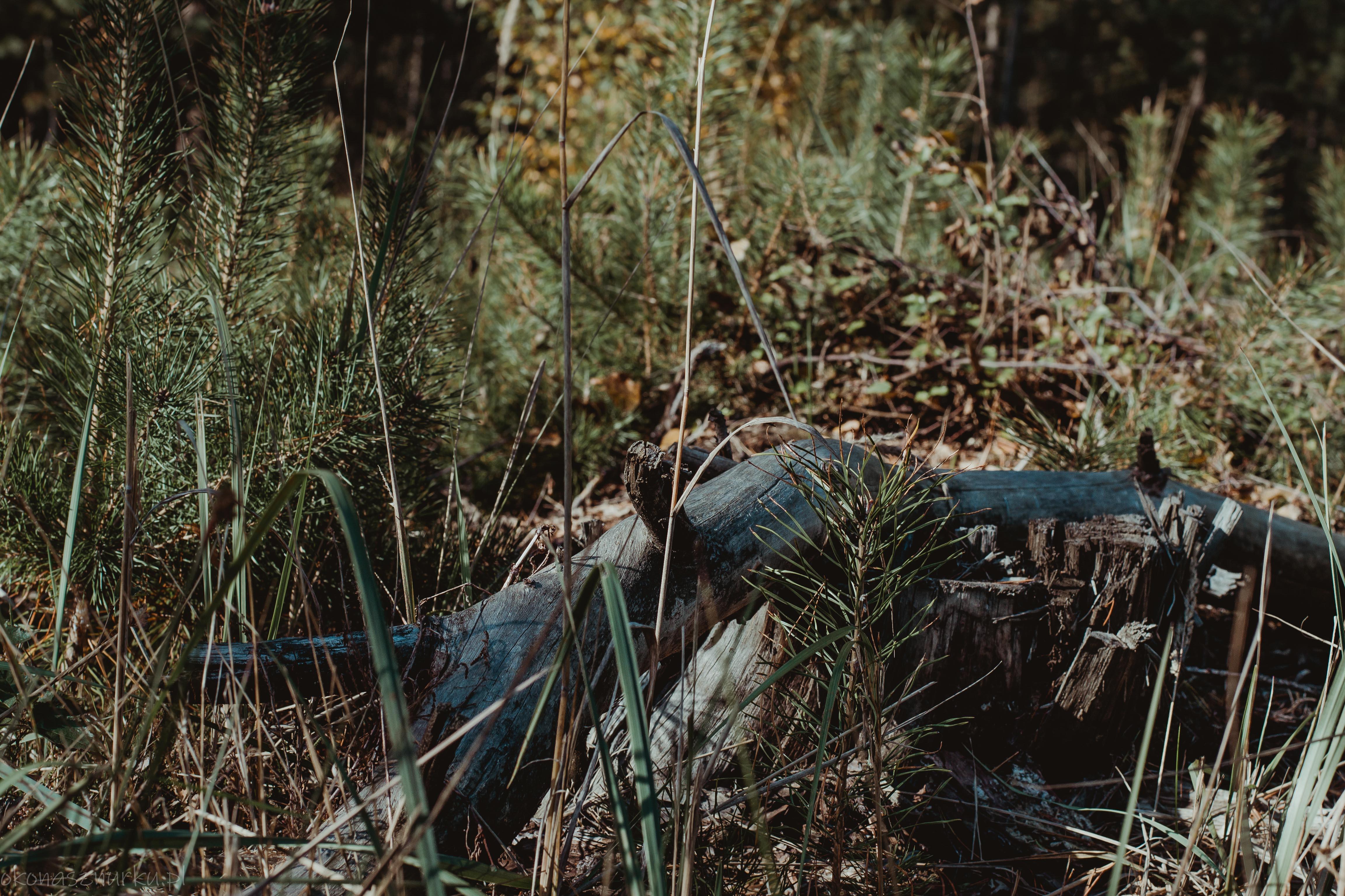 grzybobranie-okonasznurku (30)