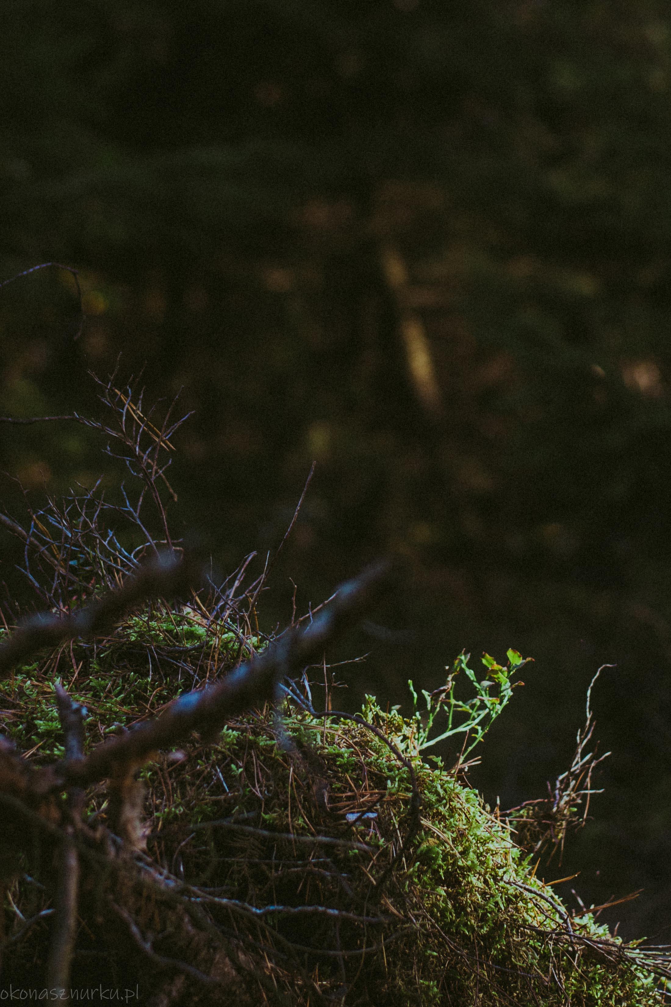 grzybobranie-okonasznurku (34)