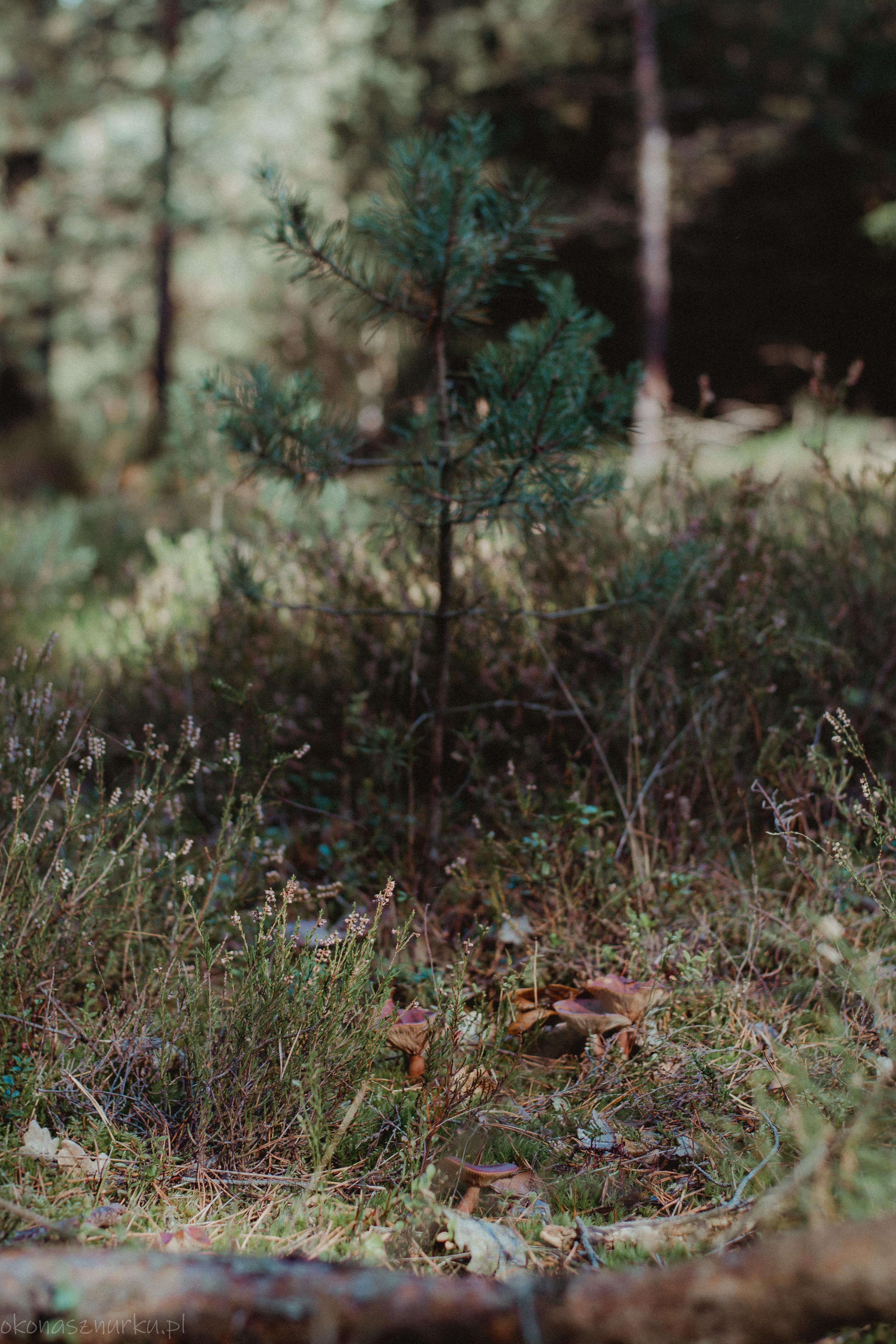grzybobranie-okonasznurku (35)
