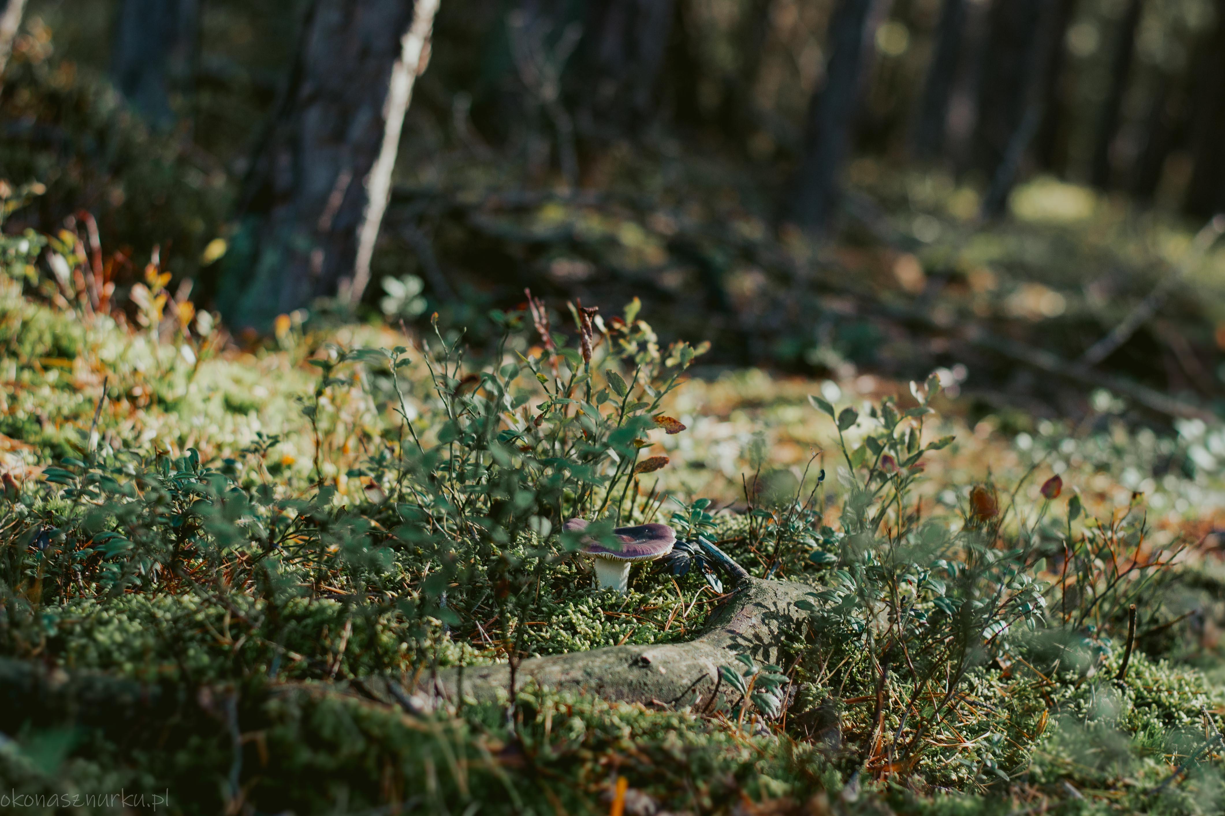 grzybobranie-okonasznurku (36)
