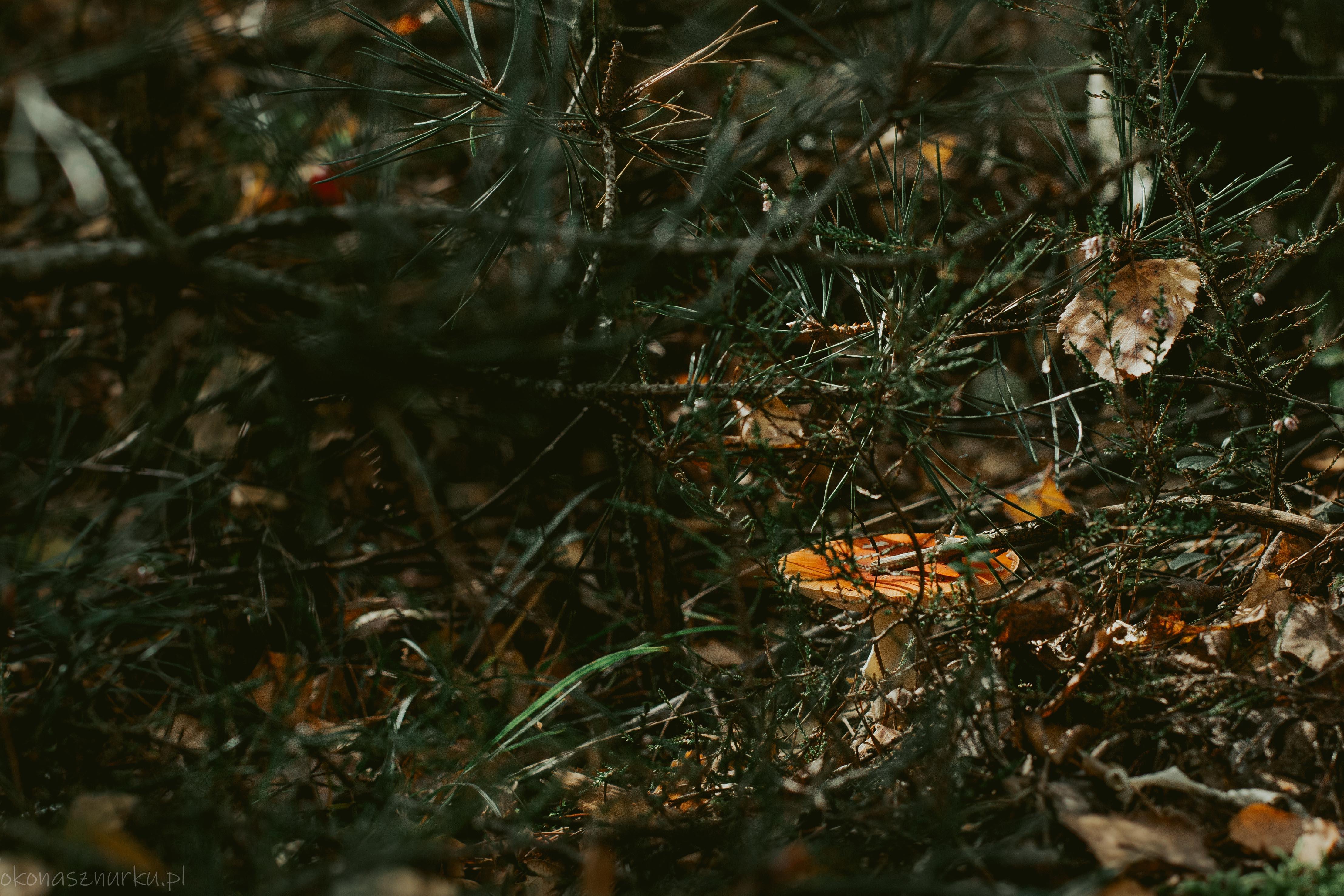 grzybobranie-okonasznurku (38)