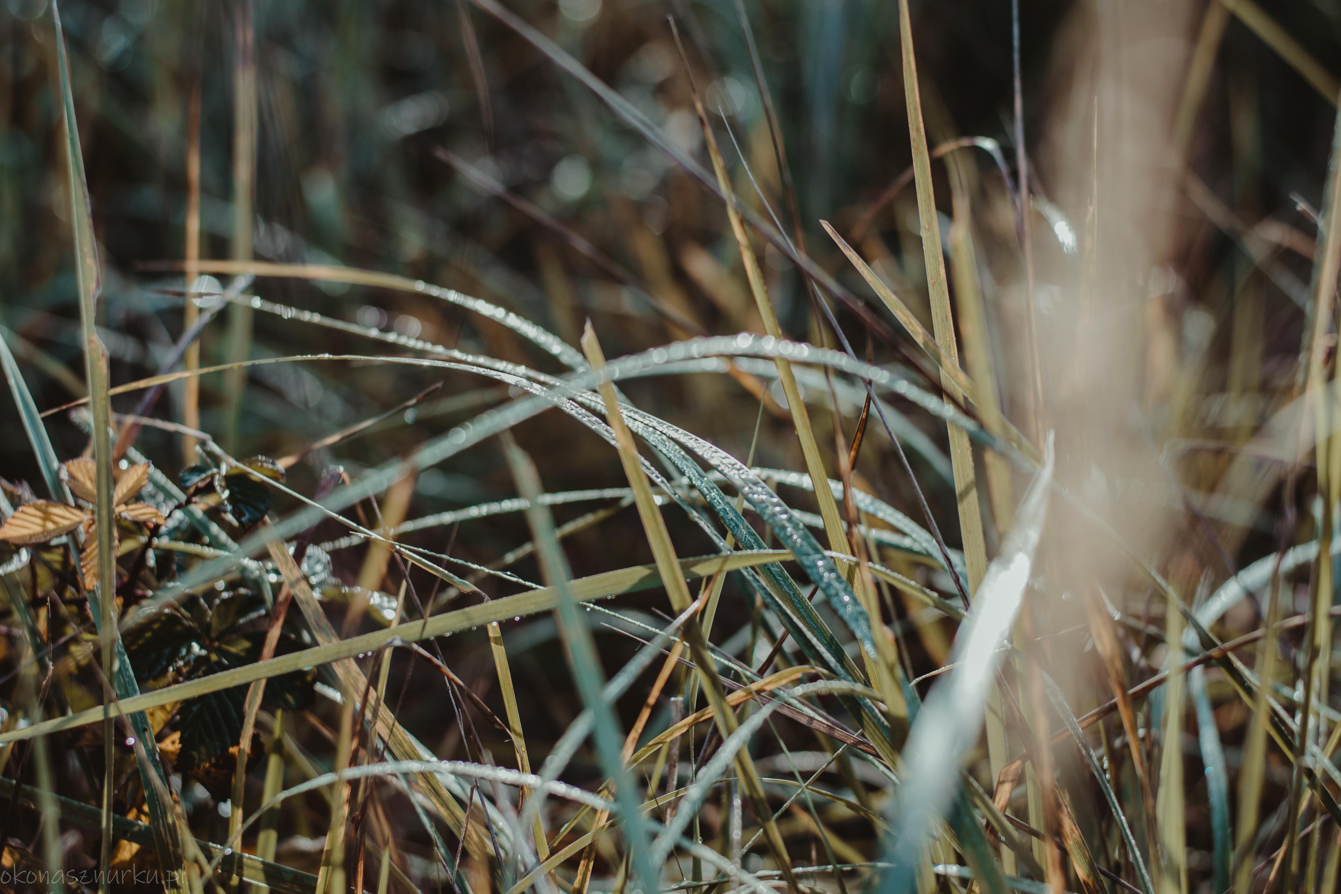 grzybobranie-okonasznurku (4)