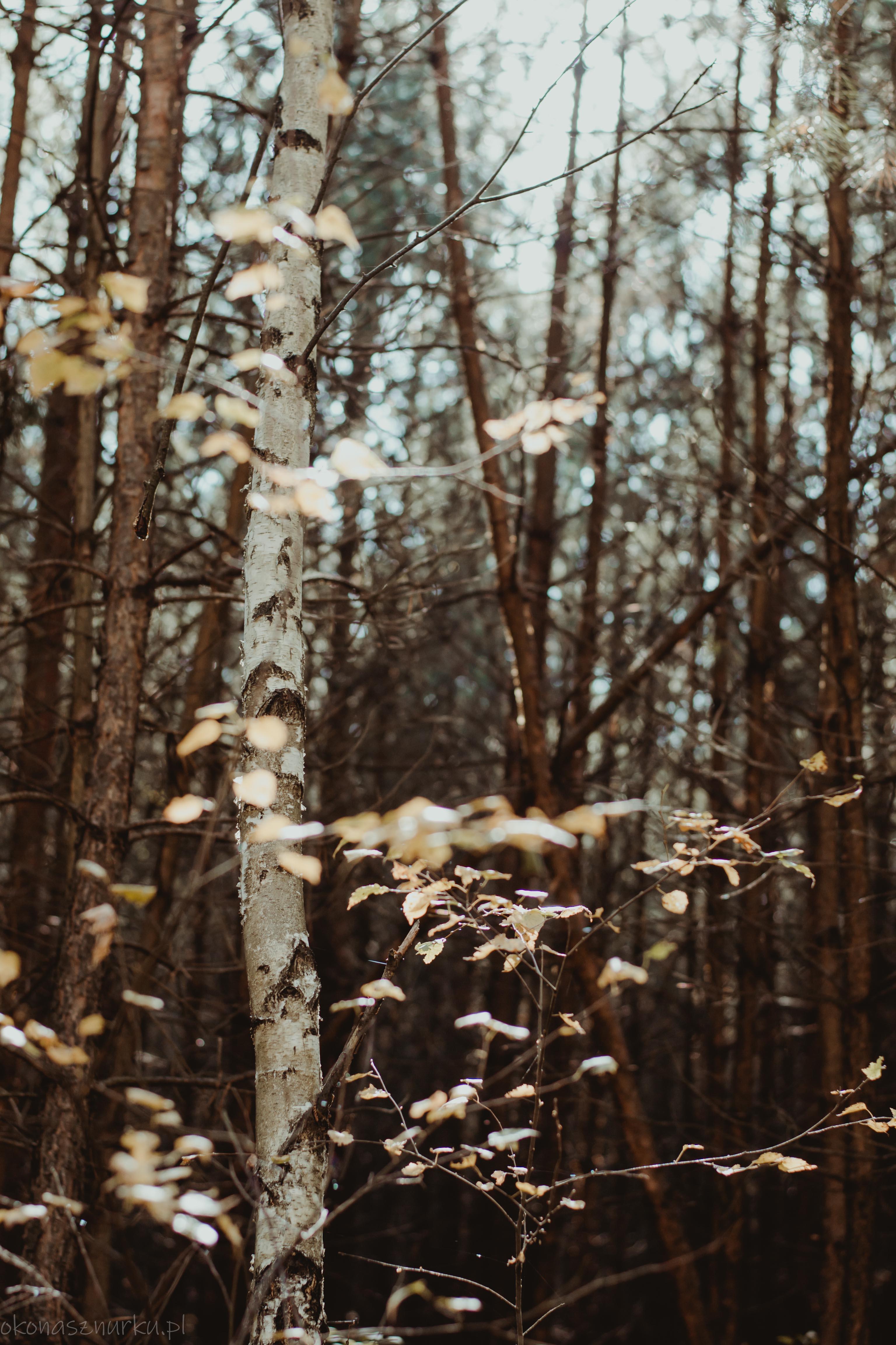 grzybobranie-okonasznurku (40)