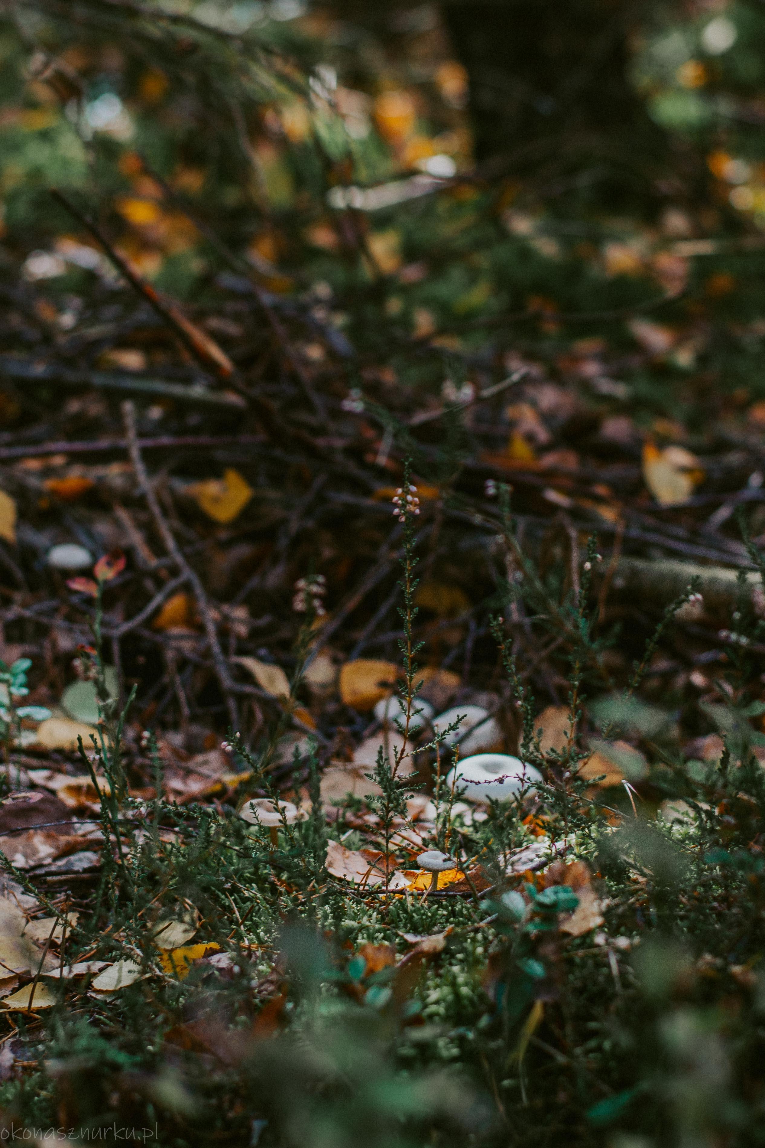 grzybobranie-okonasznurku (44)