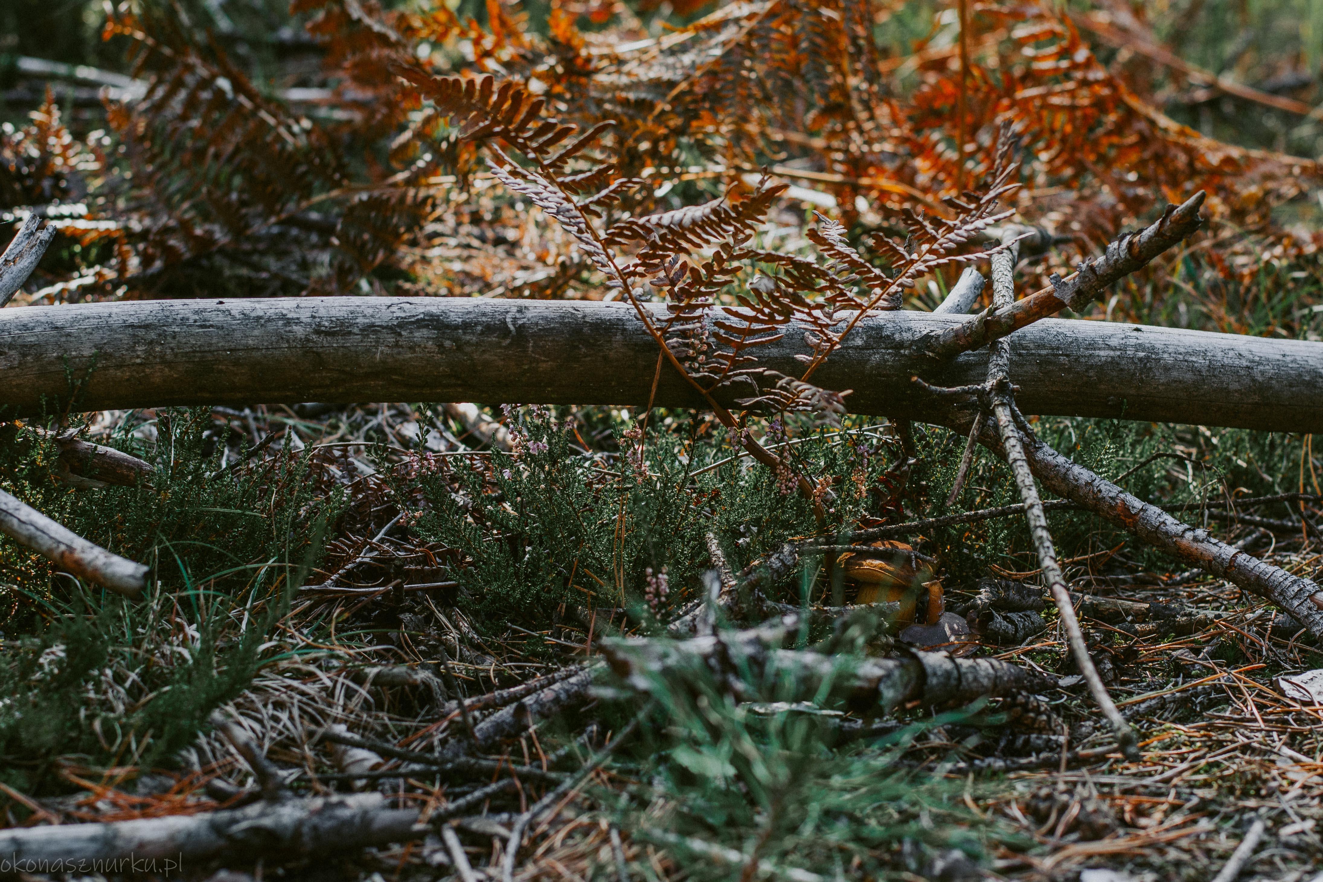 grzybobranie-okonasznurku (45)
