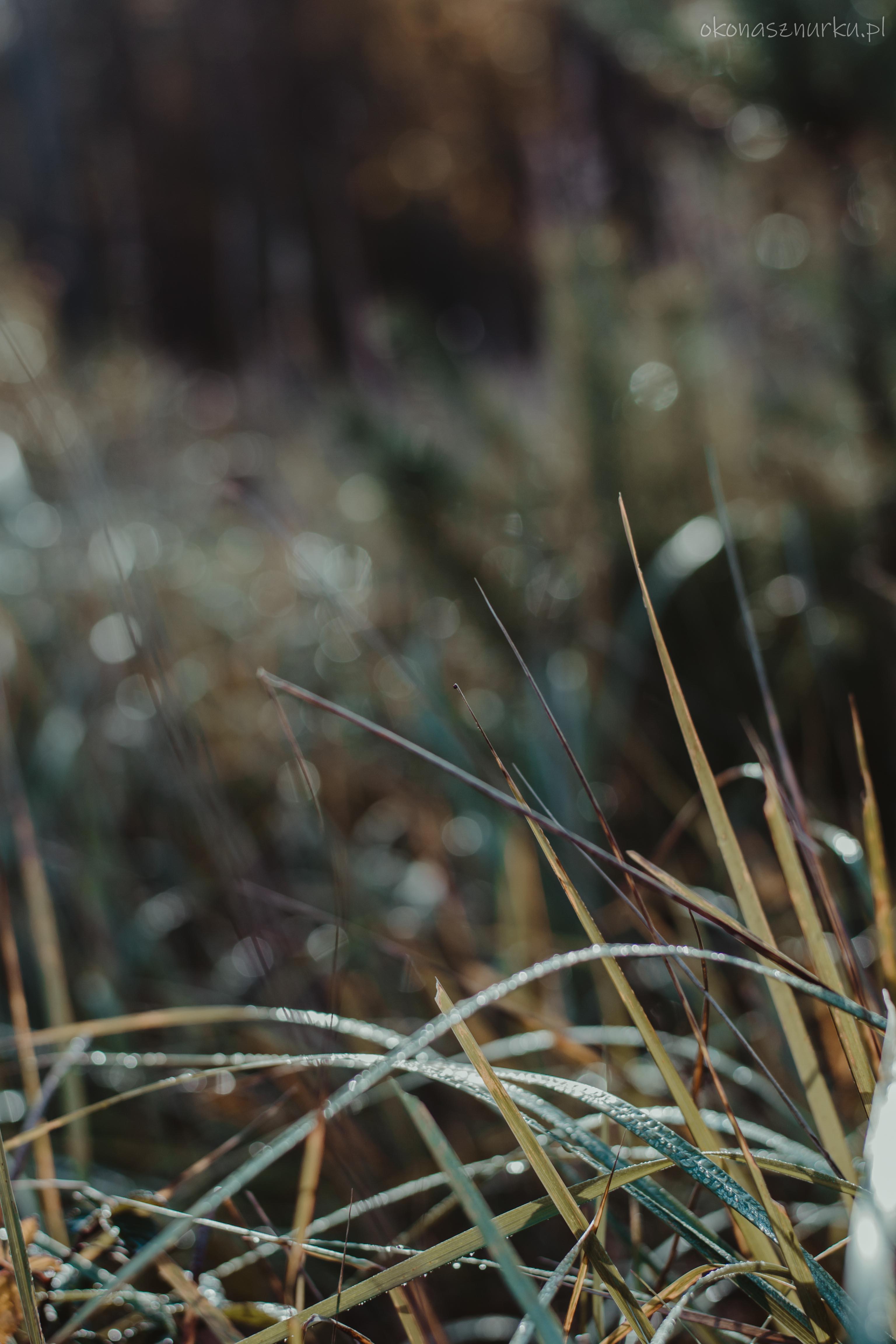 grzybobranie-okonasznurku (5)