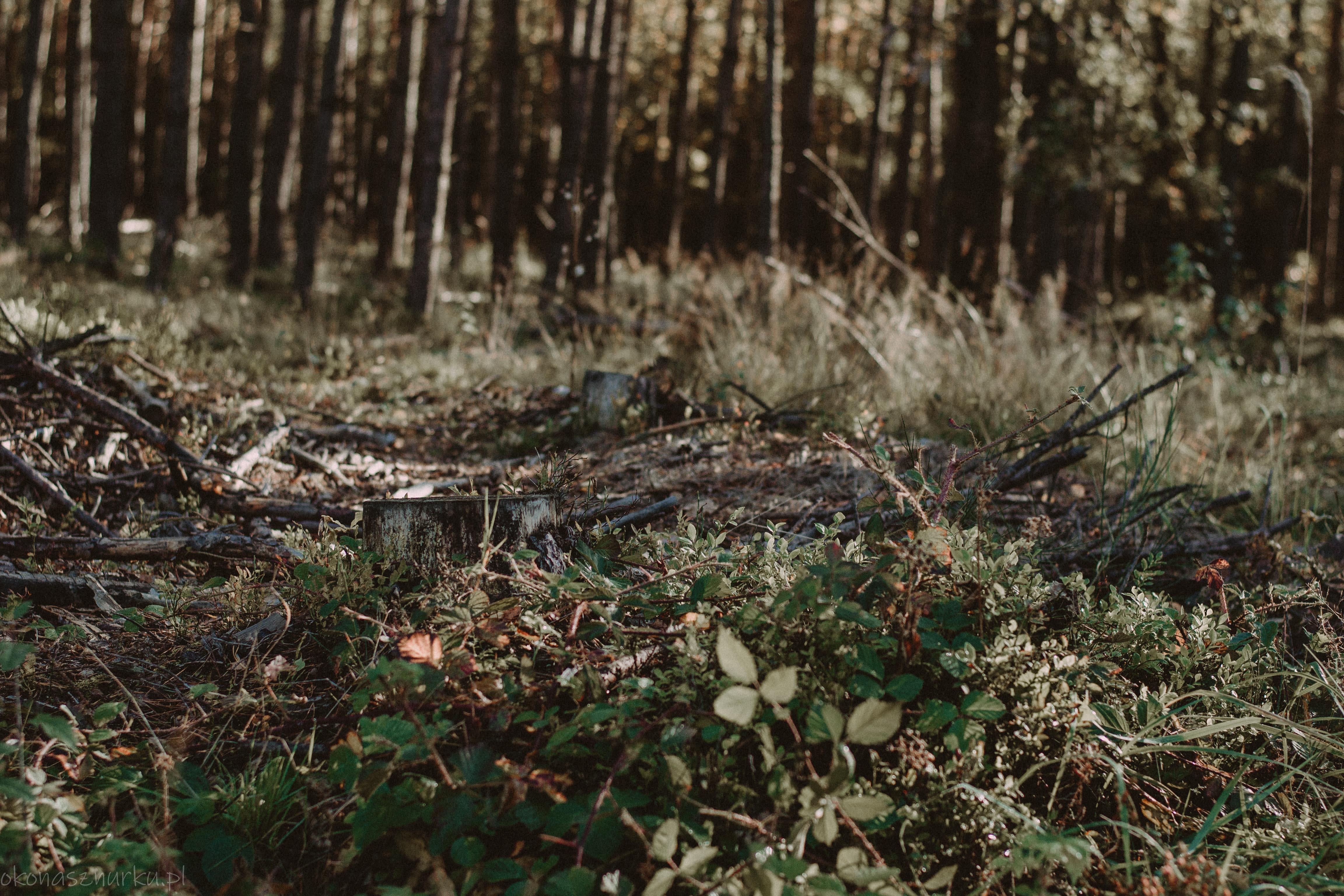 grzybobranie-okonasznurku (6)