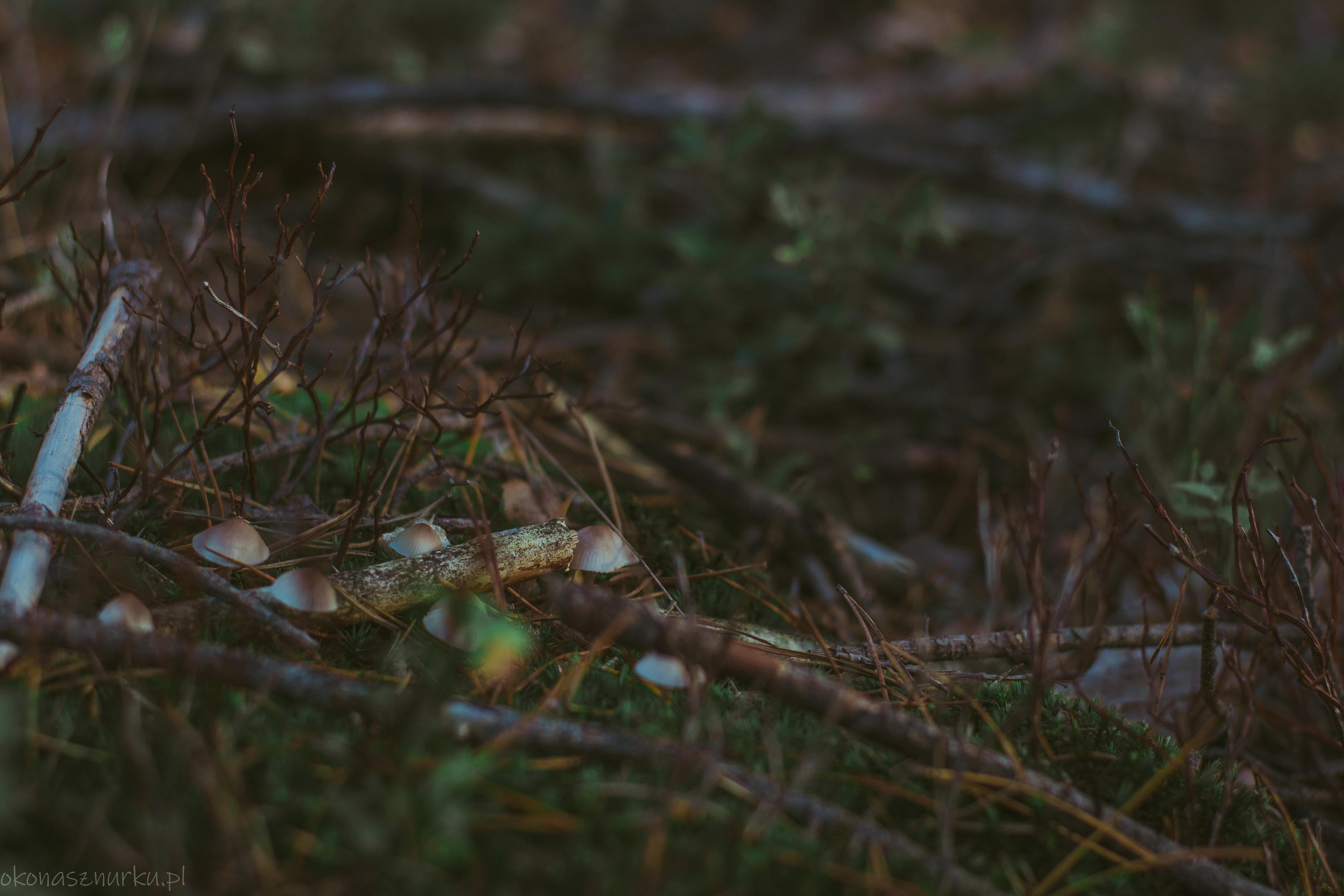 grzybobranie-okonasznurku (7)