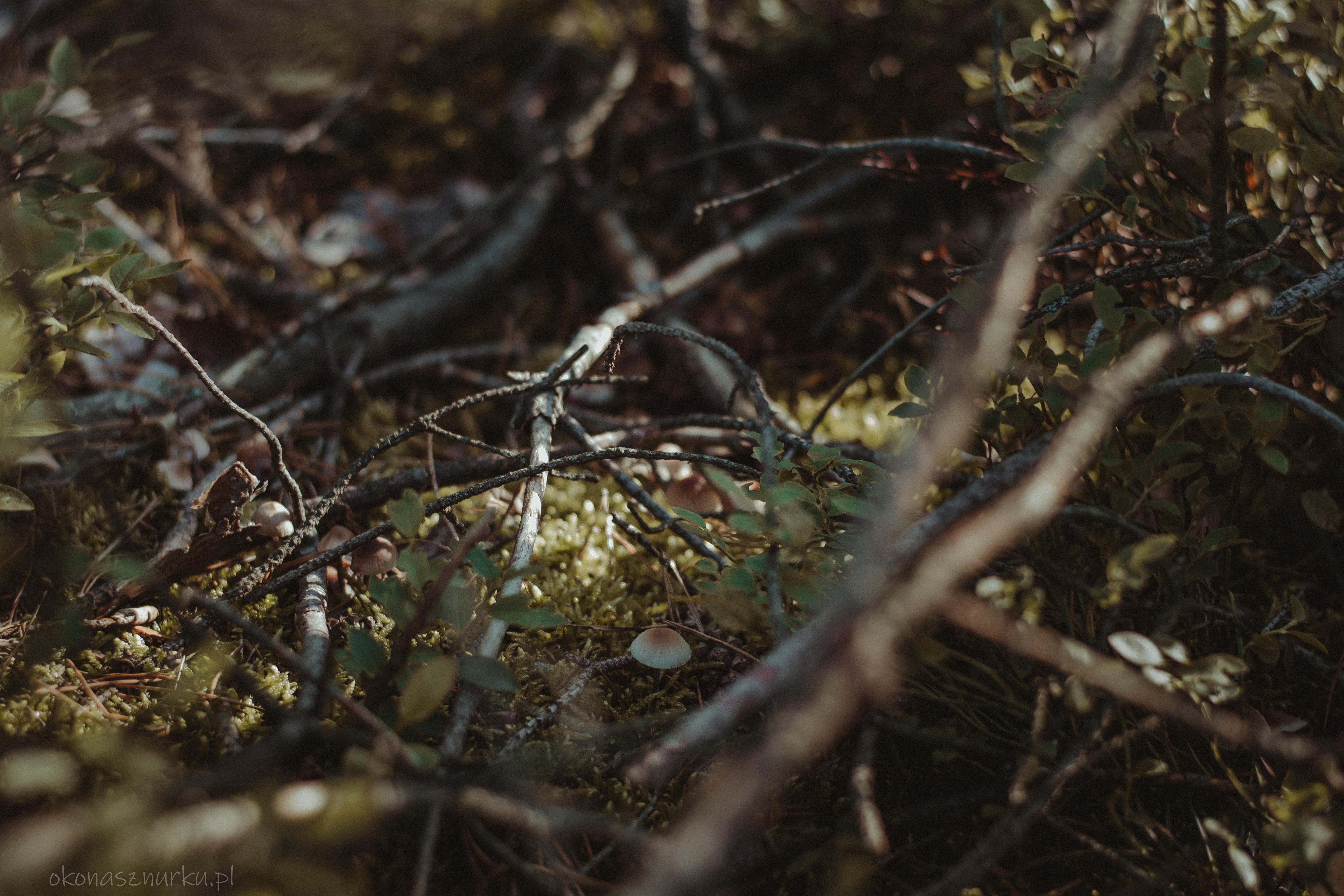 grzybobranie-okonasznurku (8)